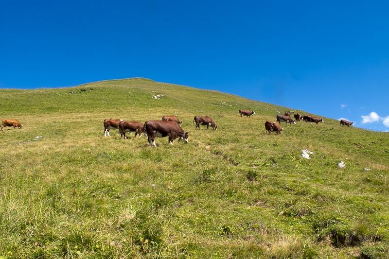 Vol du Korbé / On retrouve le plancher des vaches