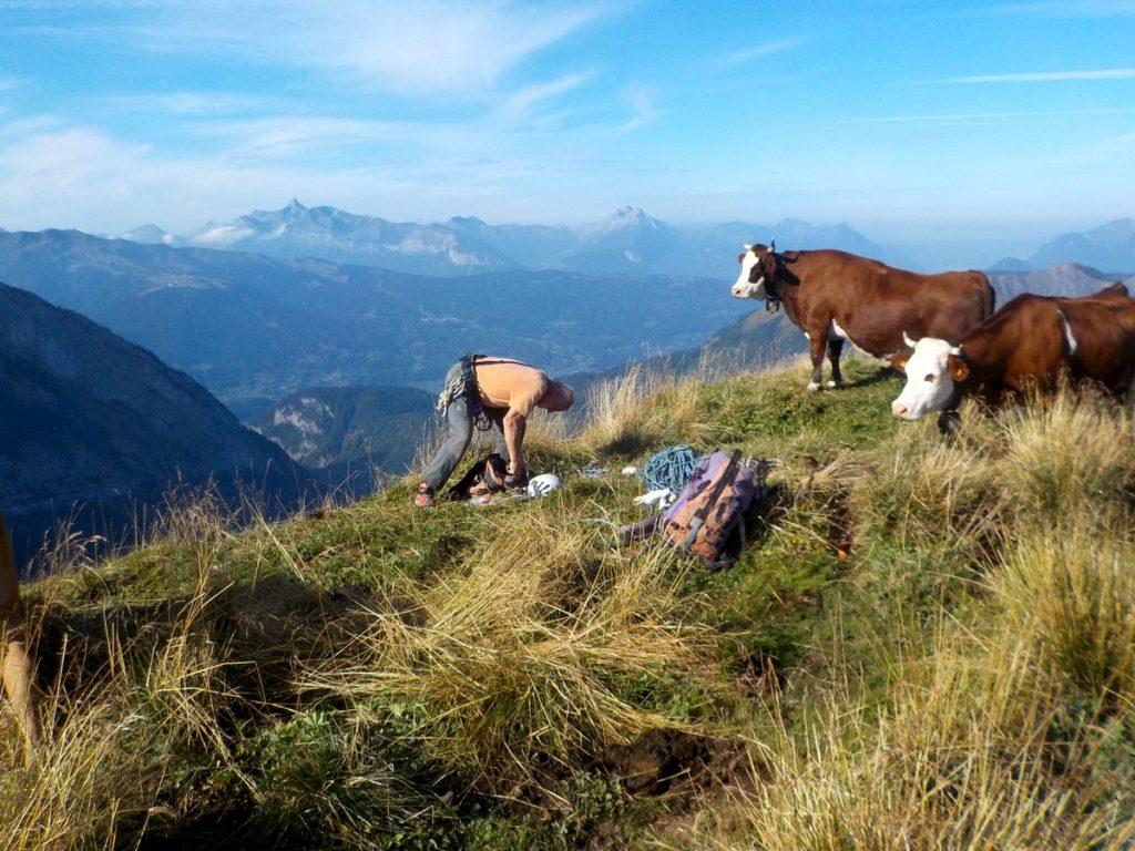 Préparation sous le regard des vaches